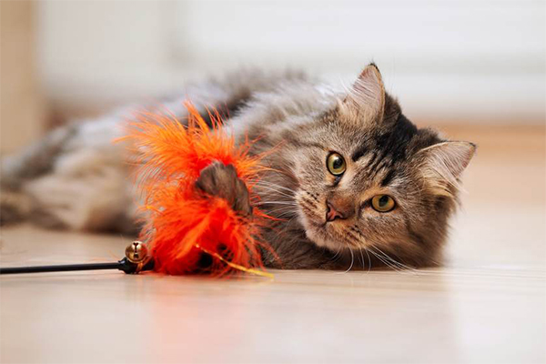 Cats love playing - cat playing with a feather toy.