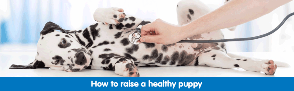How to raise a healthy puppy