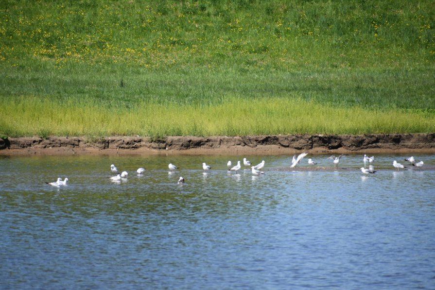 Birds at Bladensburg Waterfront Park