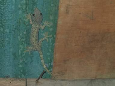 Der Gecko war riesig