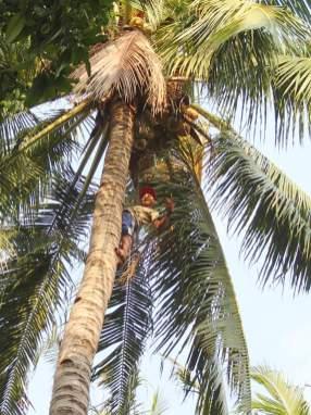 Einer der wenigen Insulater der auf die Bäume steigt