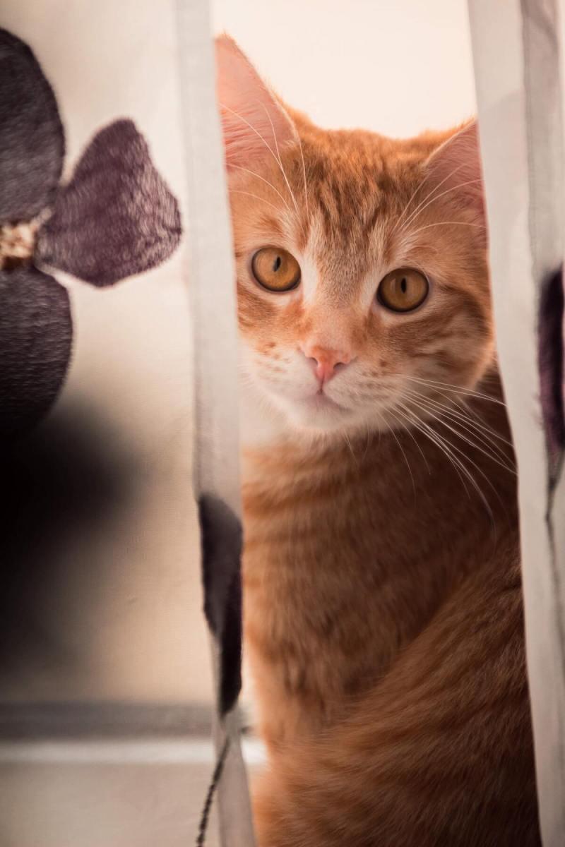 fotografia-animale-companie-caini-pisici-echipamente-foto-sfaturi-photosetup