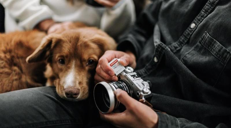 fotografia-animale-companie-caini-pisici-echipamente-foto-sfaturi-photosetup-5