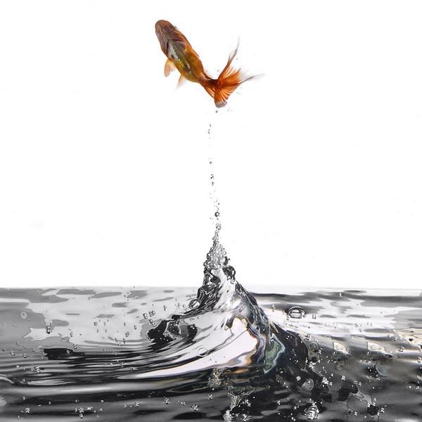 JumpingGoldFish.jpg