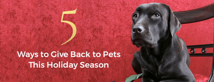5 Ways to Give Back to Pets this Holiday Season