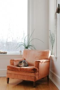 velvet chair with cat