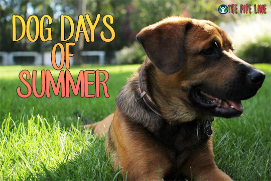 Piping Rock - The Pipe Line - Dog Days of Summer - Tips for Keeping Dog Healthy & Happy in Summer