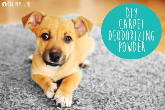 Piping Rock - The Pipe Line - DIY Carpet Deodorizing Powder