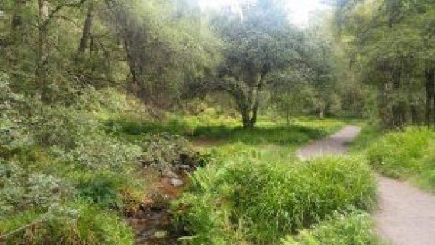 Muir of Dinnett Nature Reserve