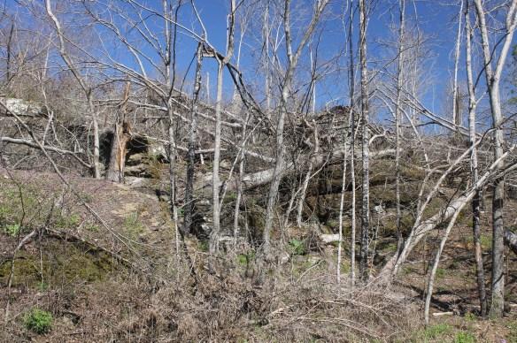 Habitat logged site at stop 18 AR2