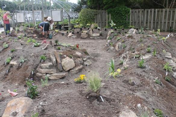 2014 9241 Grapevine planting4