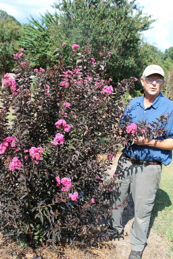 Dave Creech with Black Diamond Crape Myrtle