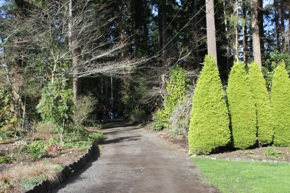 Heronswood driveway looking north