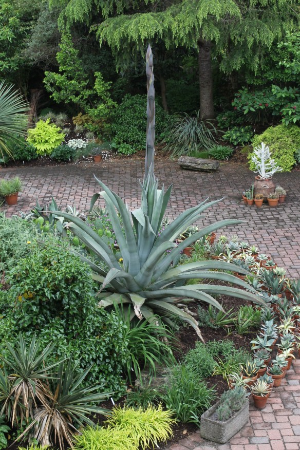 2015 9249 patio with Agave Grey Gator in spike from garage4