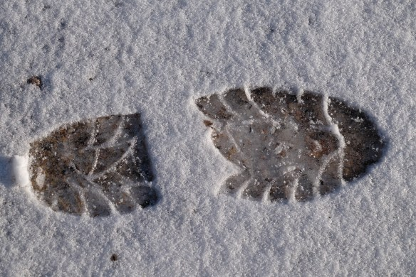 Footprint in ice3