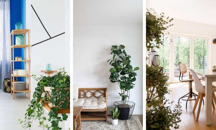 plantas nos ambientes internos