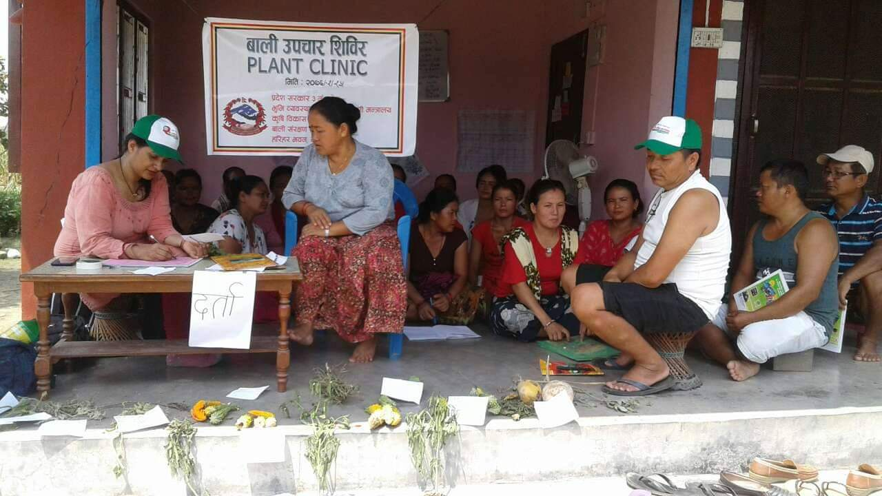 The importance of plant clinics to Nepalese smallholder farmers