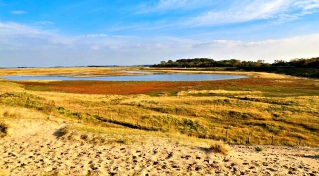 Green Spaces in Belgium: Zwin Nature Park