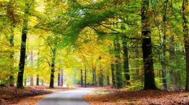 National Parks of The Netherlands: Hoge Veluwe National Park
