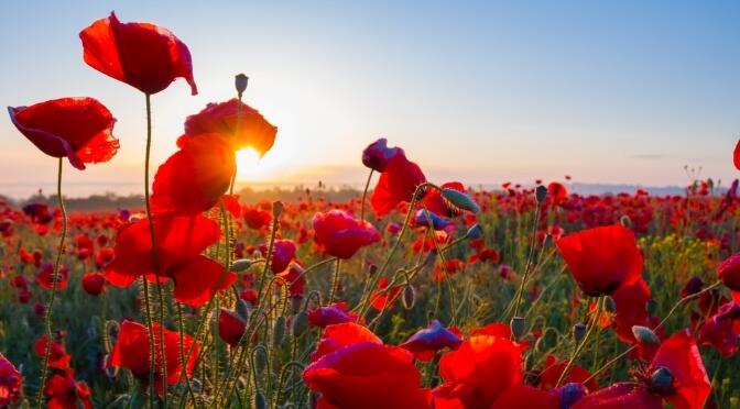 Second World War Battlefied tours poppies