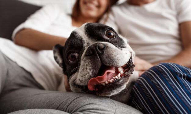 7 dicas de como manter o espaço limpo com cachorro em apartamento