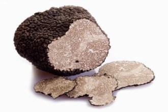 Truffe noire Pourdebon