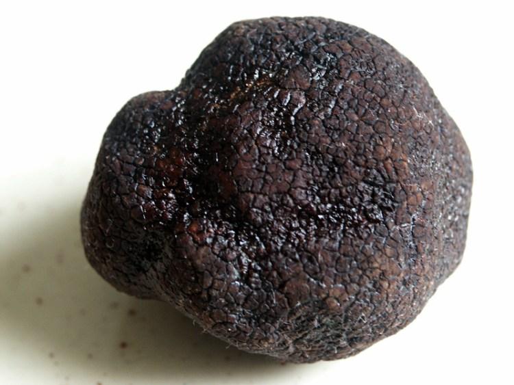 Truffe Noire du Périgord Pourdebon