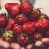 brassée de fraises
