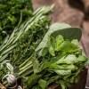 que faire avec des plantes aromatiques