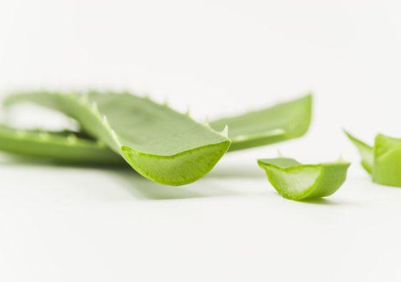 Gel d'aloe vera à l'intérieur de la feuille d'Aloe Vera Barbadensis Miller- pranaloé