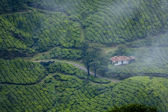 Munnar-Kerala-top-honeymoon-destination