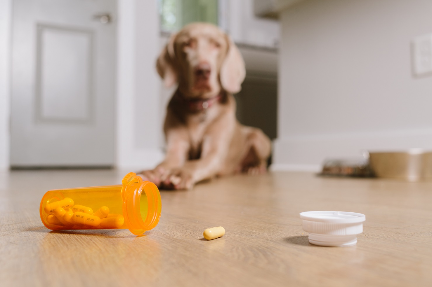 Ivermectin, Pregnancy & COVID-19: Promising but Don't Take Your Pet's Parasite Medicine