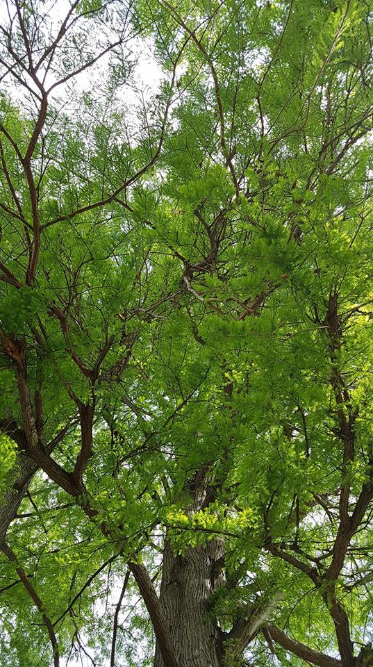 asparagi Igp di Badodere