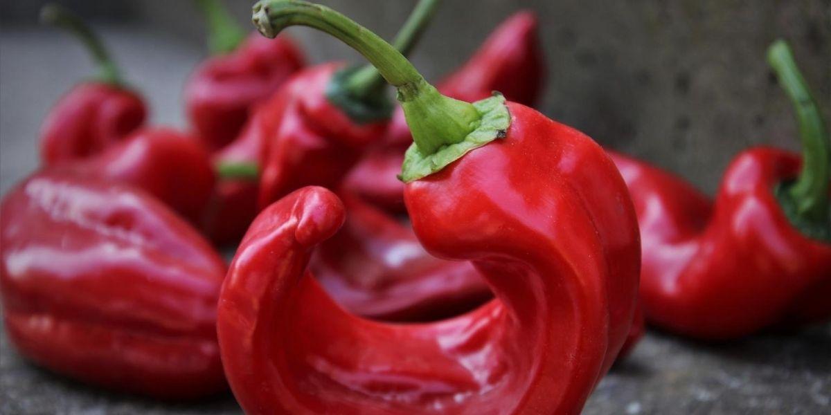 peperone rosso a corno