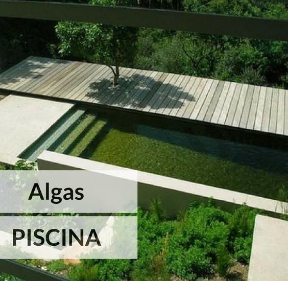 C mo eliminar y prevenir las algas en la piscina for Algas en piscinas de plastico