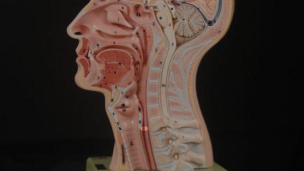 Cricopharyngeal muscle Bastian Voice