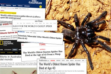 Collage of newspaper headlines over photo of a black spider