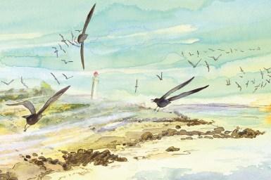 A watercolour illustration of shearwaters in flight