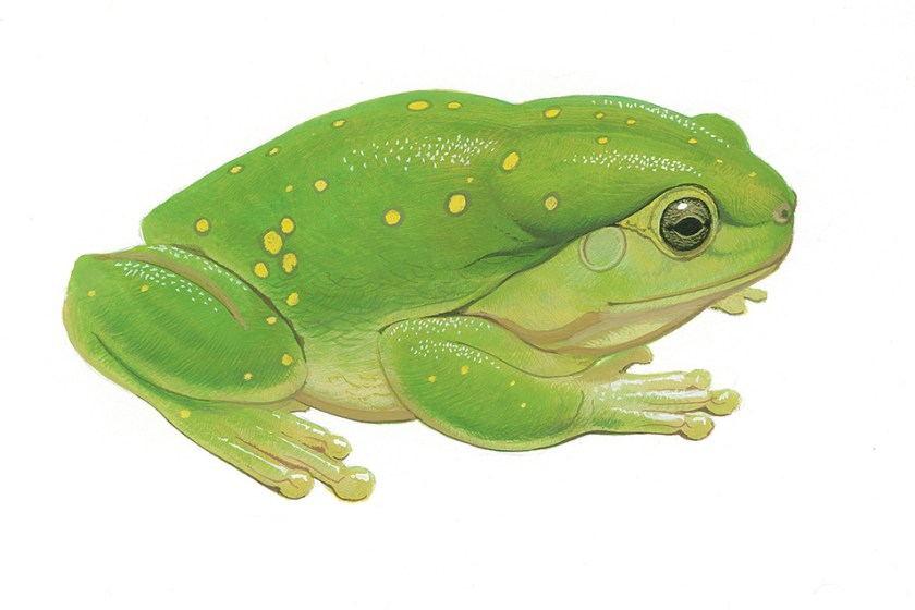 Side profile illustration of a green tree frog with yellow speckles on its back.