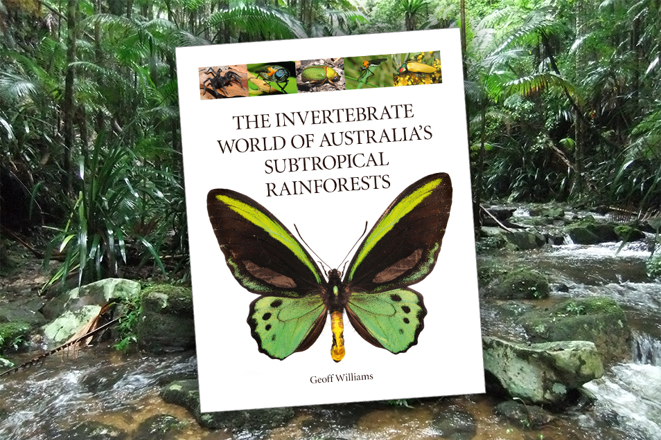 Cover of The Invertebrate World of Australia's Subtropical Rainforests upon a background photograph of subtropical rainforest.