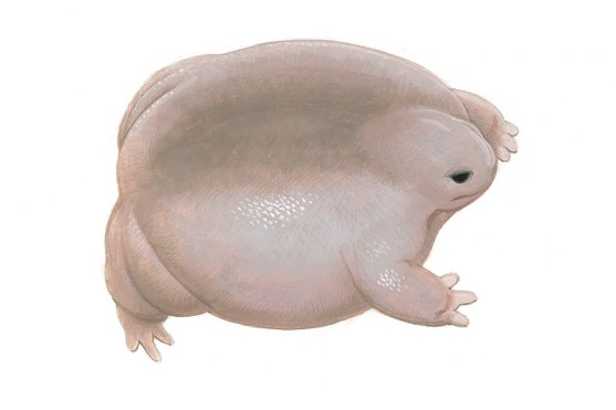 A side profile painting of a flattish, corpulent-looking frog with dirty light pink skin.
