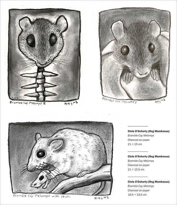 Three charcoal drawings depicting a live Bramble Cay Melomys, an intact head upon a skeletal spine, and a Bramble Cay Melomys holding a skull of its kin.