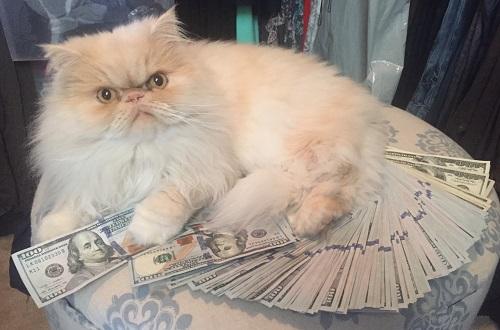Don't let Cash Cat steal your college cash!