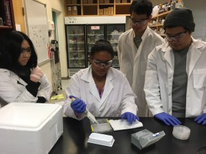Biotechnology students (like Charlene Wang's classmates shown here) learn to use a variety of lab equipment.