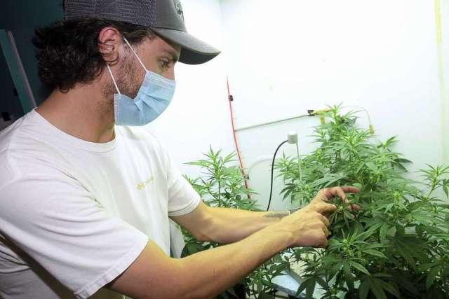 USU researchers debunk myths to find optimal hemp growth
