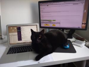 Biurko w pracy zdalnej