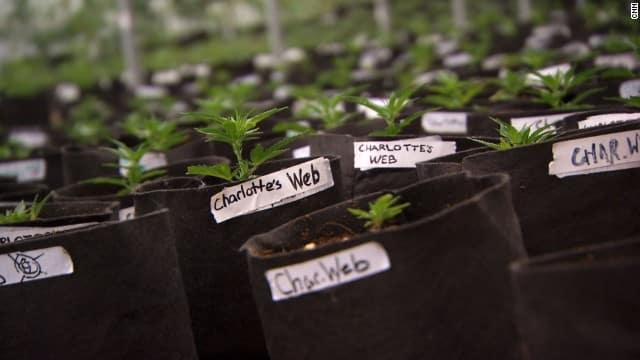 http://www.cnn.com/2013/08/07/health/charlotte-child-medical-marijuana/