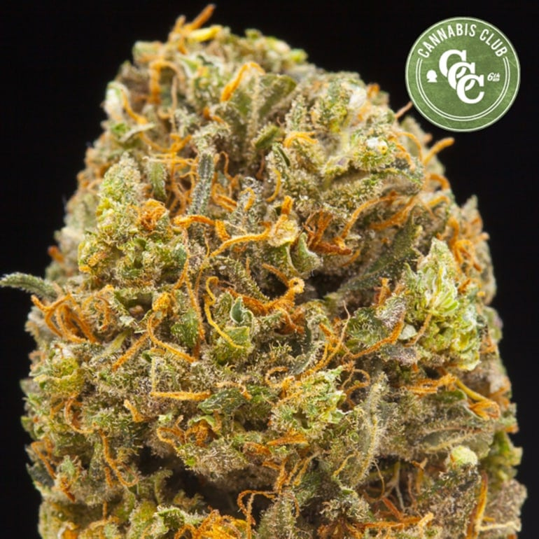 https://weedmaps.com/dispensaries/washington/n-tacoma-federal-way/cannabisclubcollective
