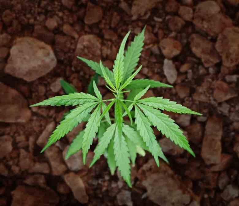 Hawaii Cannabis Consulting Dispensary Checklist