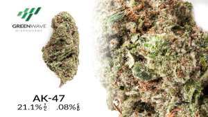 AK-47 marijuana strains